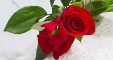 美乐家纯质精油:玫瑰精油的秘密及用法大公开