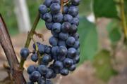 植醇葡萄籽调和油