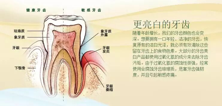 洁齿牙膏—鲜薄荷/醇肉桂
