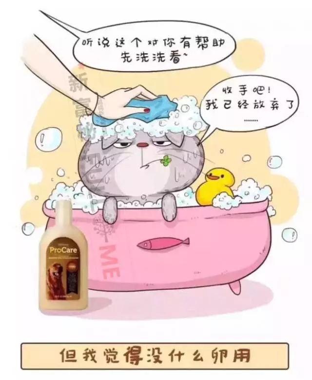 天然精油宠物洗毛精