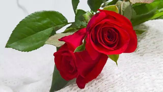 美乐家玫瑰精油的秘密