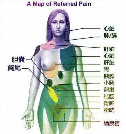 人体也有保质期